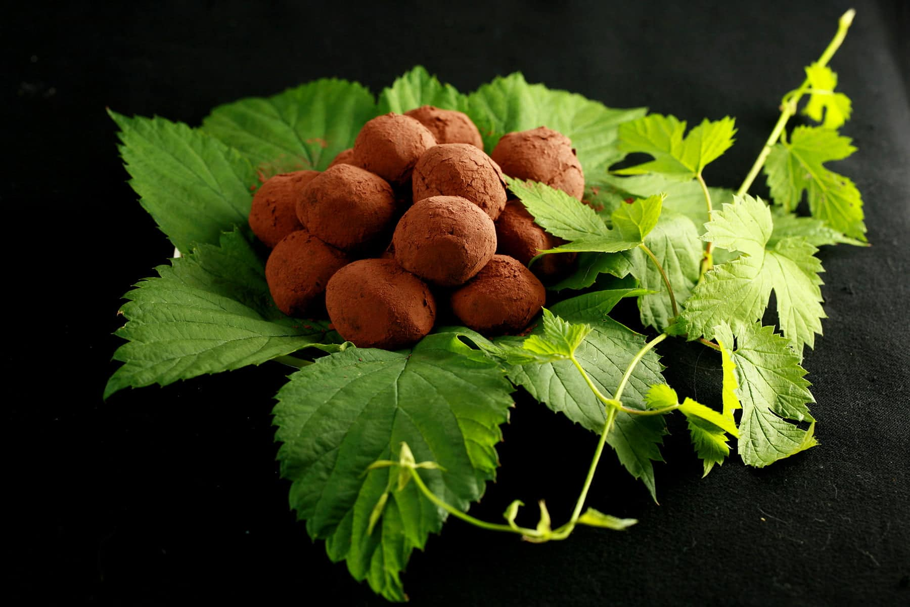 A mound of dark chocolate hop truffles rests on a pile of hop leaves and hop bines.
