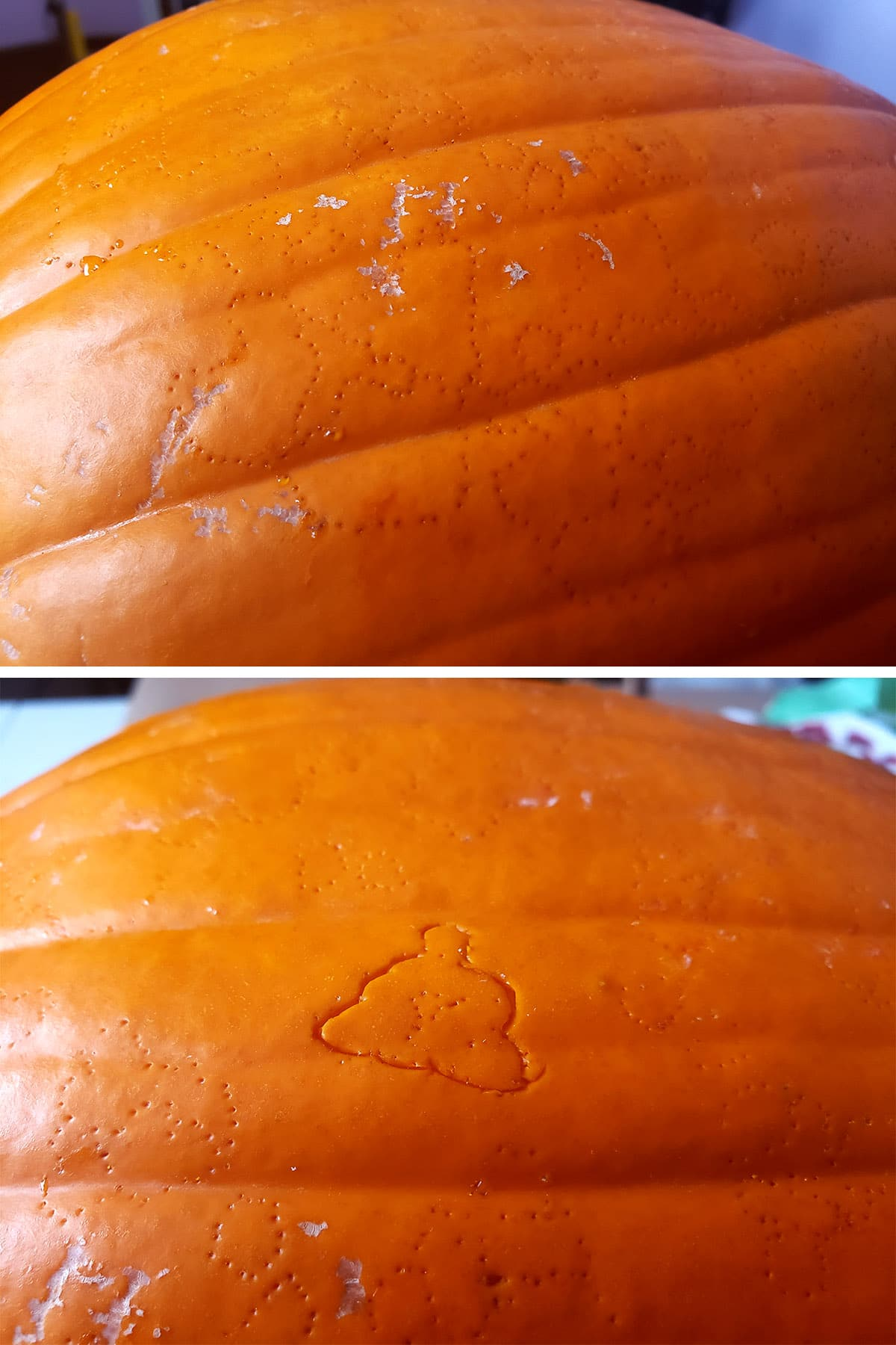 A close up view of the pumpkin with the covid particle design outlined on it in pin pricks.