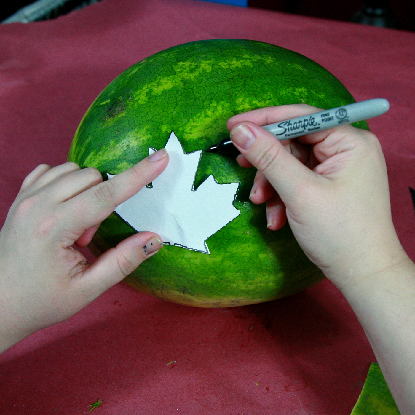 Two hands trace a cut out o a maple leaf onto a watermelon, using a sharpie marker.