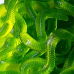 Dill Pickle Gummy Worms