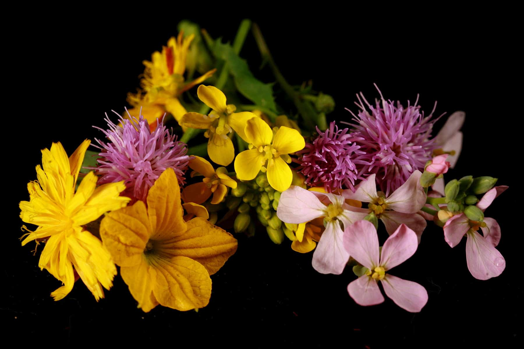 A small bunch of random wildflowers, against a black background.