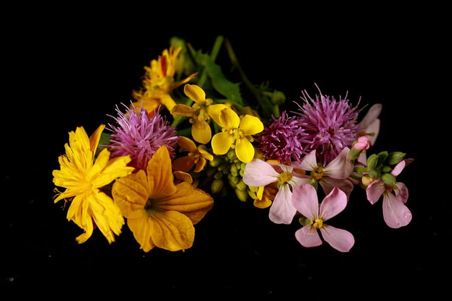 A selection of wild flowers, against a black background.