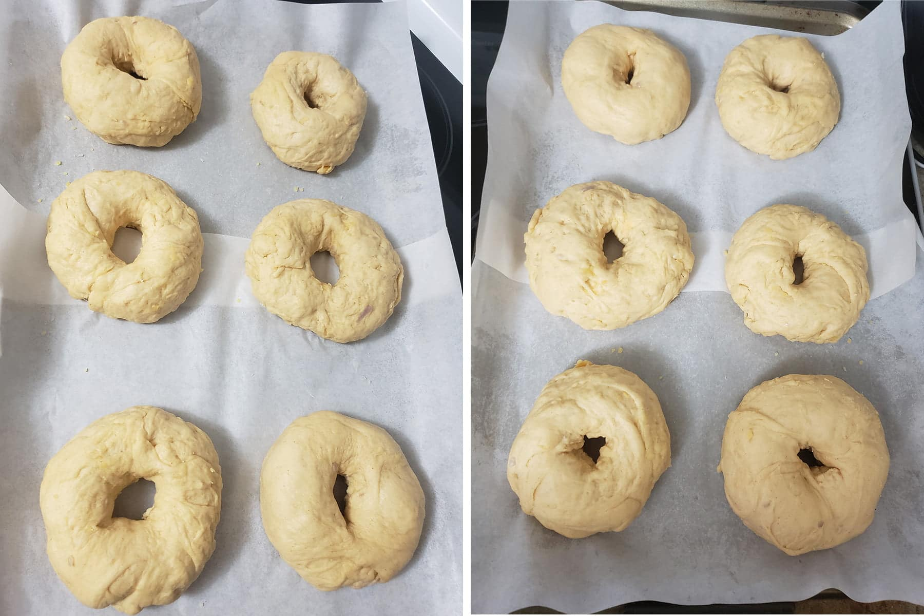 A two part compilation image showing a pan of 6 formed bagels, before and after the final rise.
