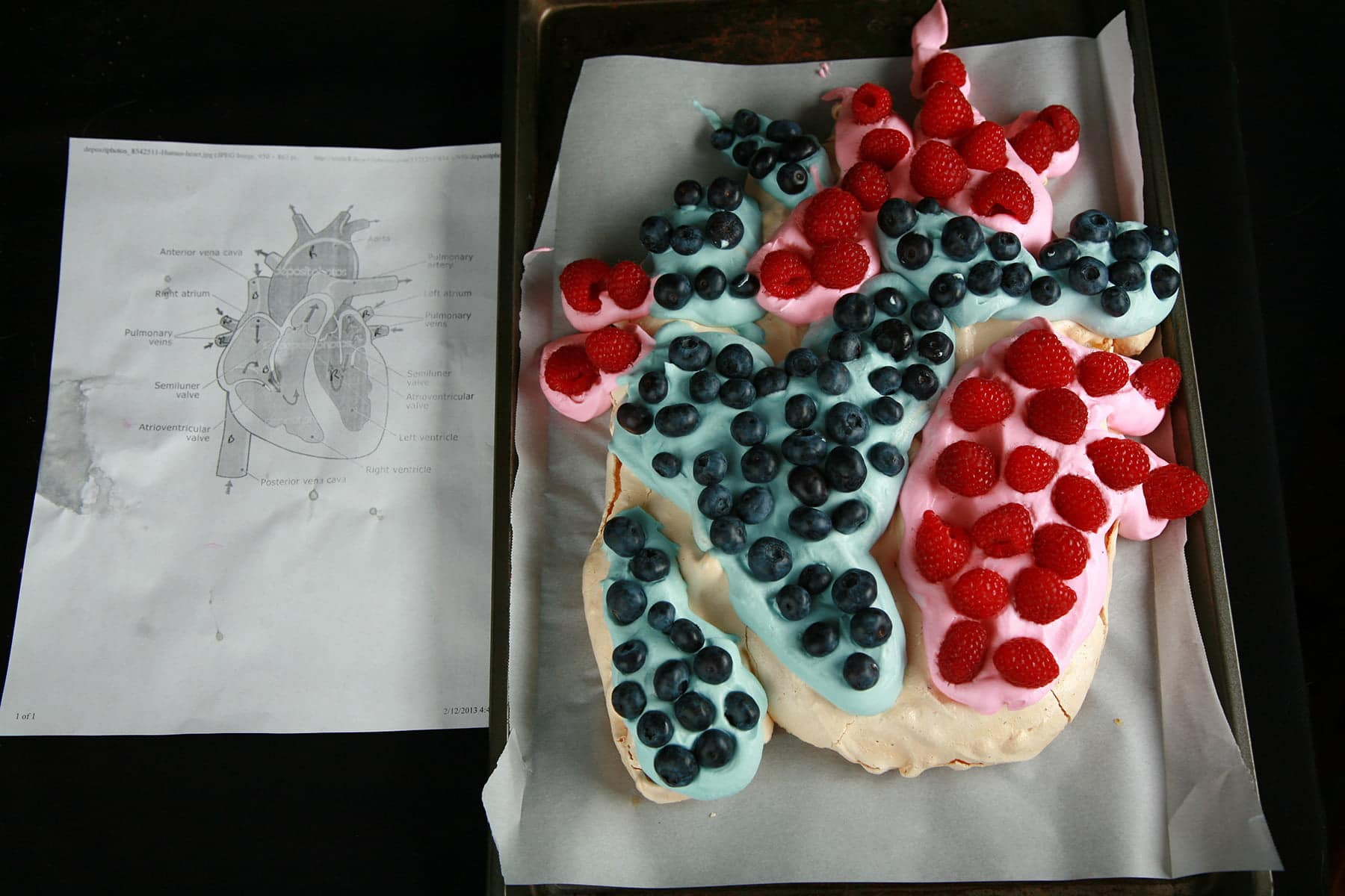 A pavlova made to look like an actual heart - with blue and red whipped cream, raspberries, and blueberries. It is shown next to a paper diagram of a human heart.