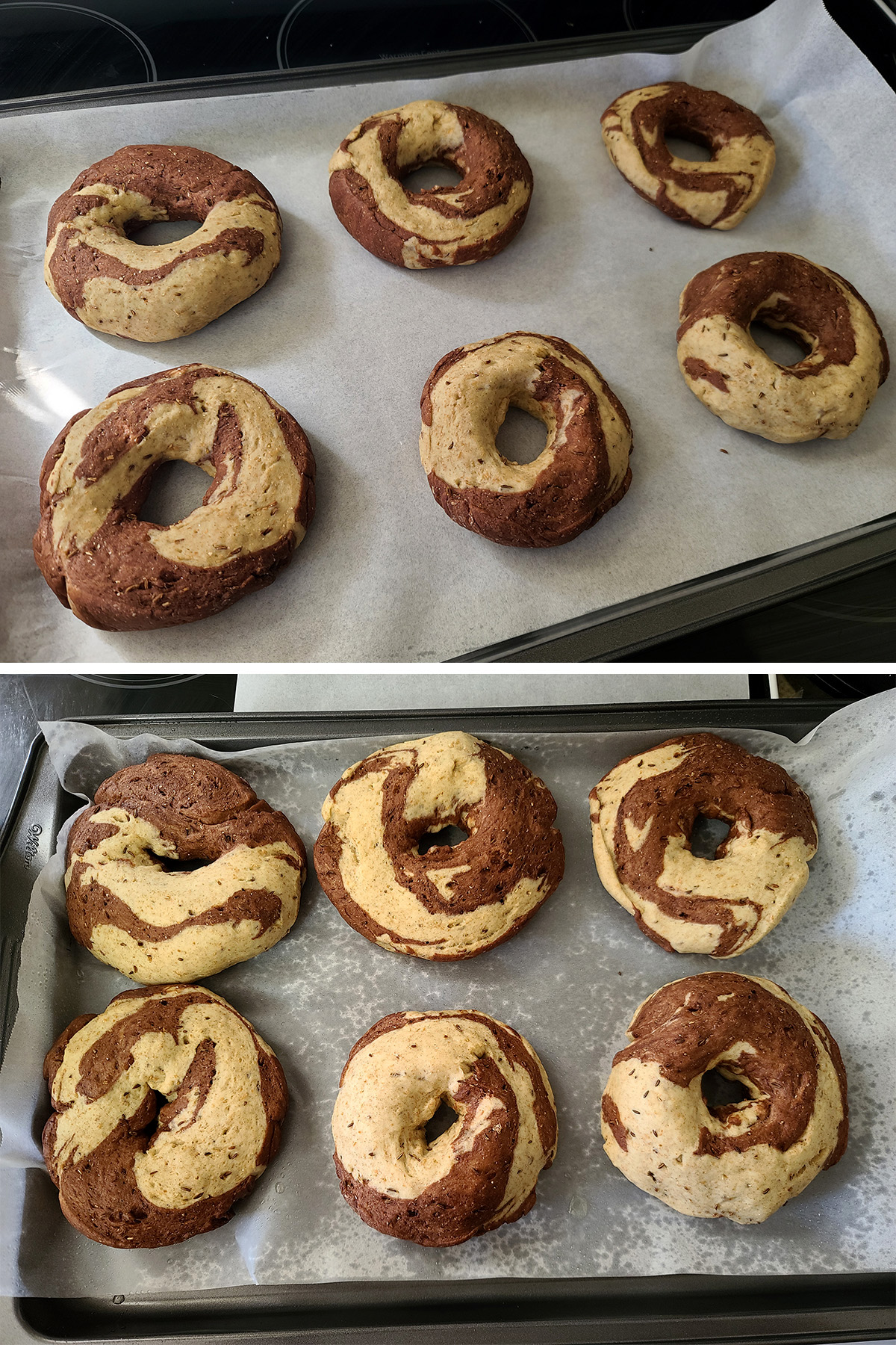 6 unbaked marbled rye bagels, before and after the final rise.
